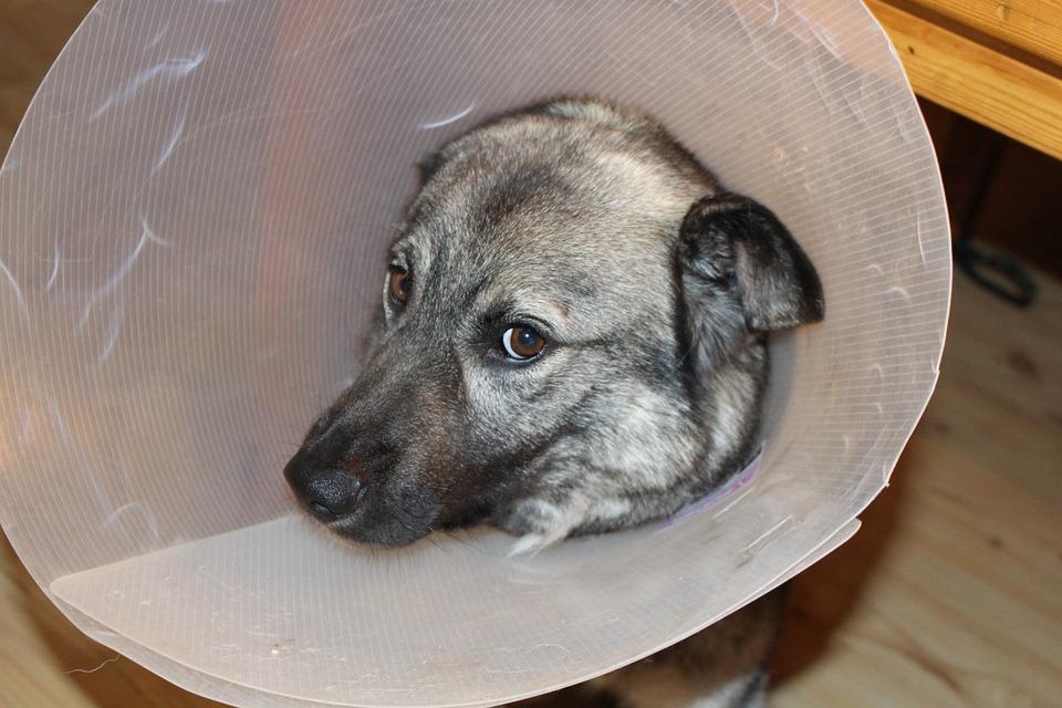 Doggy Diseases